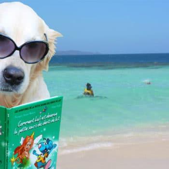 Chien en train de lire à la plage